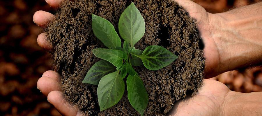 Nachhaltigkeit (Bild: Pixabay)
